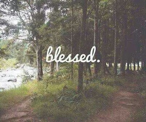 blessed, nature, and forest image