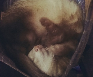 baby, crazy, and ferret image