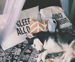 dog, husky, and bedroom image
