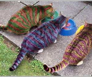 funny pictures, funny images, and funny painted cats image