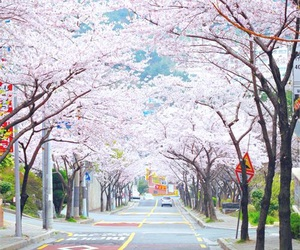 cherry blossom, trees, and japan image