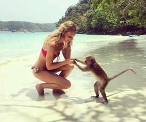 beach, monkey, and cute image