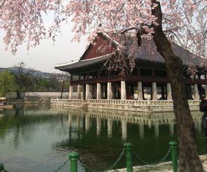 korea, pink, and south image