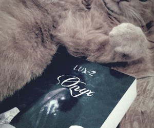 book, kitten, and onyx image