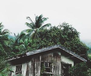 nature, wallpaper, and tumblr image