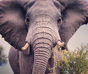 africa, animal, and elephant image