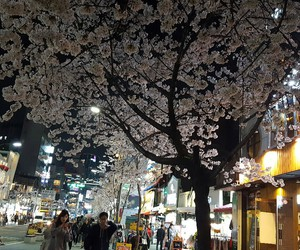 asia, cherry blossoms, and korean image