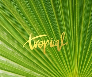 tropical, wallpaper, and desktop image