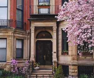 flowers, spring, and architecture image