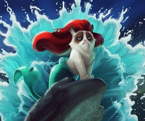 ariel, cat, and funny image