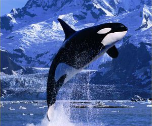 animal, whale, and ocean image