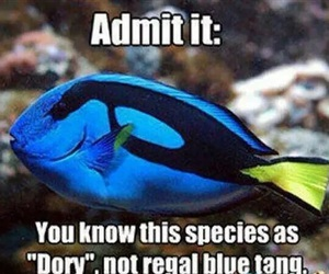 finding nemo, fish, and funny image