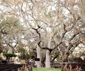 ceremony, tree, and wedding image