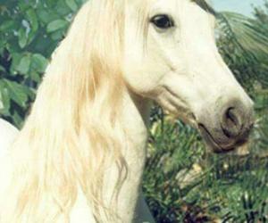 unicorn, funny, and idiot image
