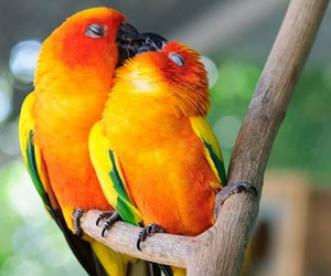bird, animal, and kiss image
