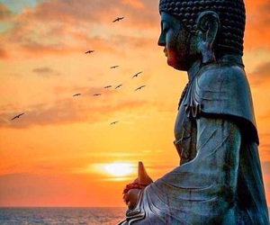 quotes, Buddha, and fly image