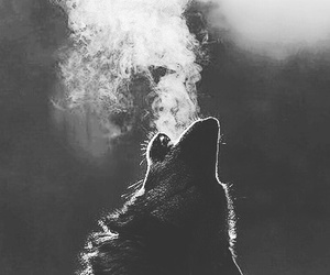images and wolves image