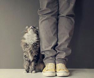 cat, cute, and pet image