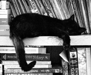 book, cat, and black and white image
