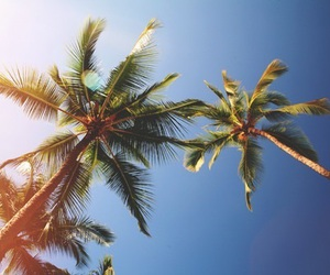 summer, palm trees, and sky image