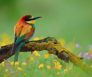 bird, beautiful, and nature image