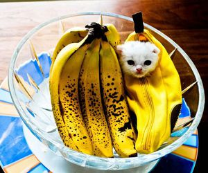 cat, banana, and cute image