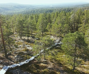 finland, forest, and hike image