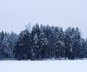finland, forest, and snow image