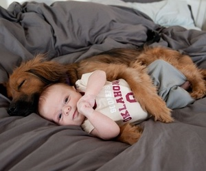 adorable, child, and puppy image