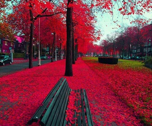 red, autumn, and amsterdam image
