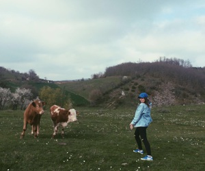 aesthetic, cool, and cows image