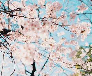 flowers, japan, and tree image
