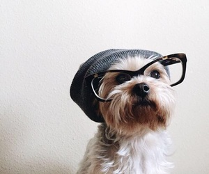 dog, animal, and hipster image