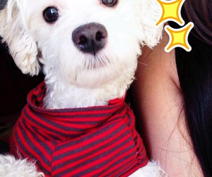 caniche, dog, and perro image