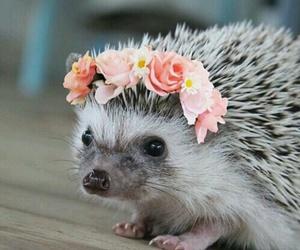 hedgehog, cute, and flowers image
