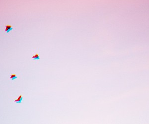 birds, fly, and pink image