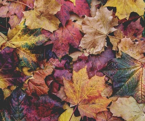 autumn and beauty image