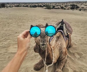 camel and glasses image