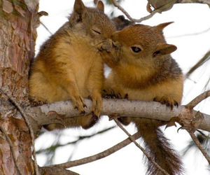 animal, squirrel, and kiss image