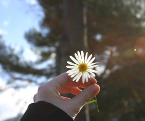flowers sun photography image