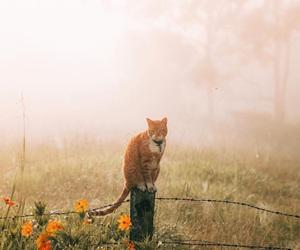 animal, fog, and morning image