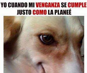 venganza, dogs, and lol image