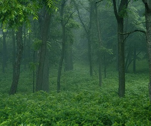 fog, forest, and grass image