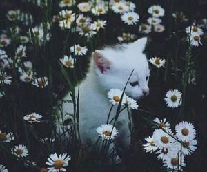 blanco, flores, and gatito image