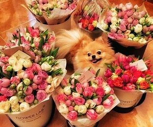 animals, puppy, and floral image