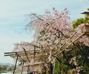 blue sky, sakura, and canopy image