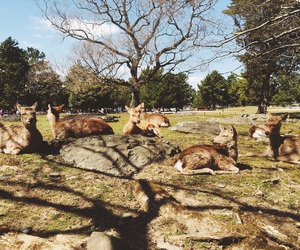 bambi, deer, and japan image