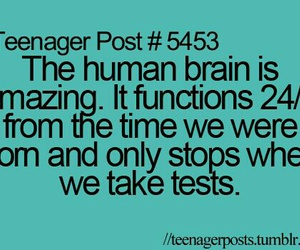 funny, test, and brain image