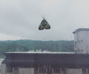 moth, nature, and afternoon image