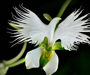 flowers, bird, and white image